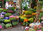 Flower Market in Les Houches